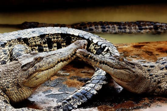 8 Differences Between Alligators and Crocodiles
