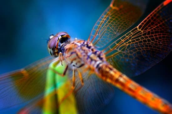 Fascinating Dragonfly Facts and Symbolism